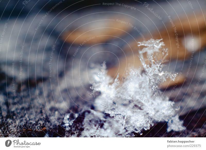 Schneeflocke Umwelt Natur Landschaft Wasser Wassertropfen Winter Eis Frost ästhetisch elegant schön kalt blau mehrfarbig gelb gold schwarz demütig Surrealismus
