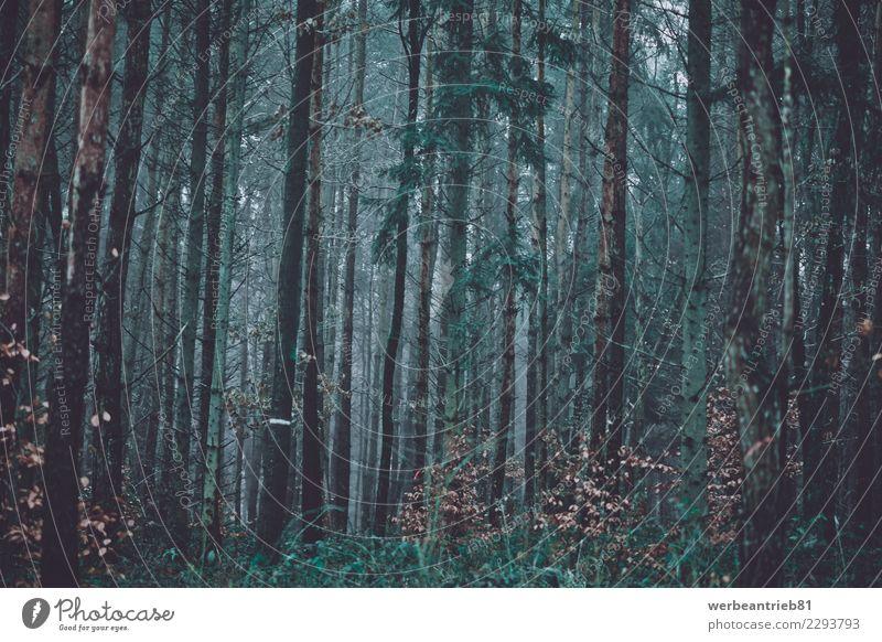 Düsterer Wald Natur Pflanze grün Baum Einsamkeit Winter Umwelt Herbst Holz Angst wandern Park Abenteuer fantastisch Romantik