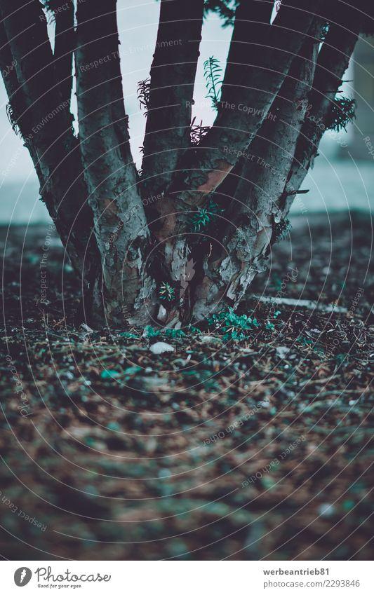 Wurzelwerk Natur Pflanze Winter Umwelt Herbst Traurigkeit Wiese Garten Ausflug Freizeit & Hobby wandern Park Feld Erde dreckig Sträucher