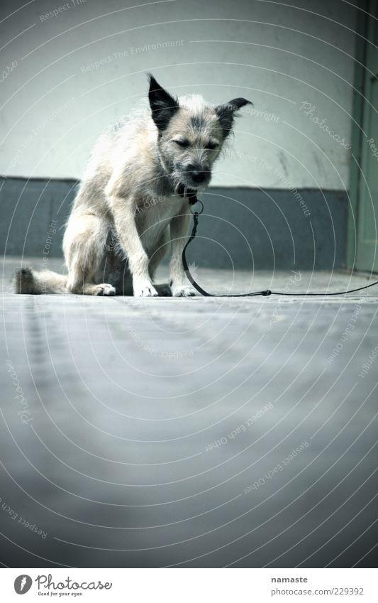 fear... Tier Einsamkeit Gefühle Hund Traurigkeit Stimmung Angst Armut gefährlich trist bedrohlich niedlich Todesangst Verzweiflung Haustier Schwäche