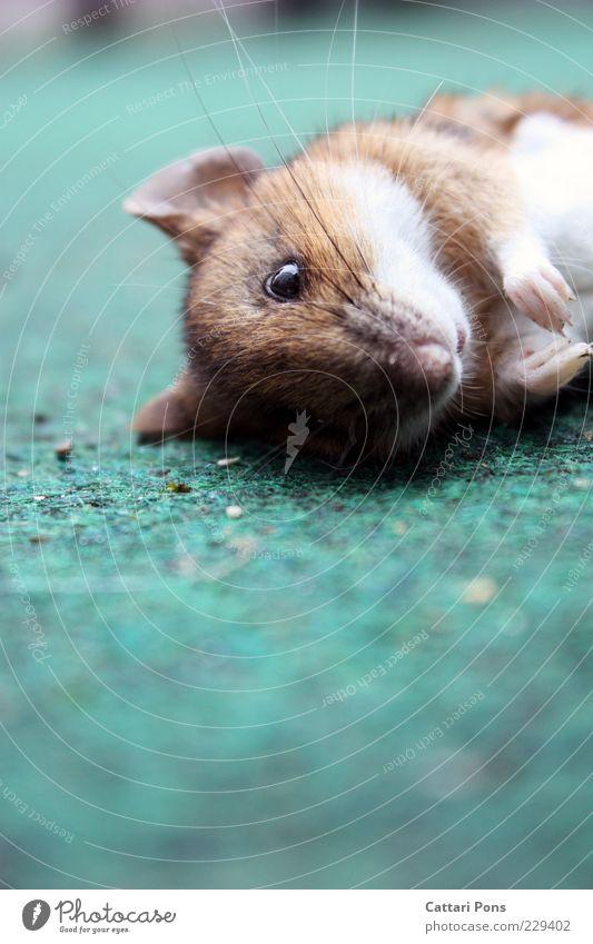 aus die Maus Tier Wildtier Totes Tier Tiergesicht 1 liegen authentisch einfach nah natürlich wild Tod Farbfoto Außenaufnahme Nahaufnahme Tag Tierporträt