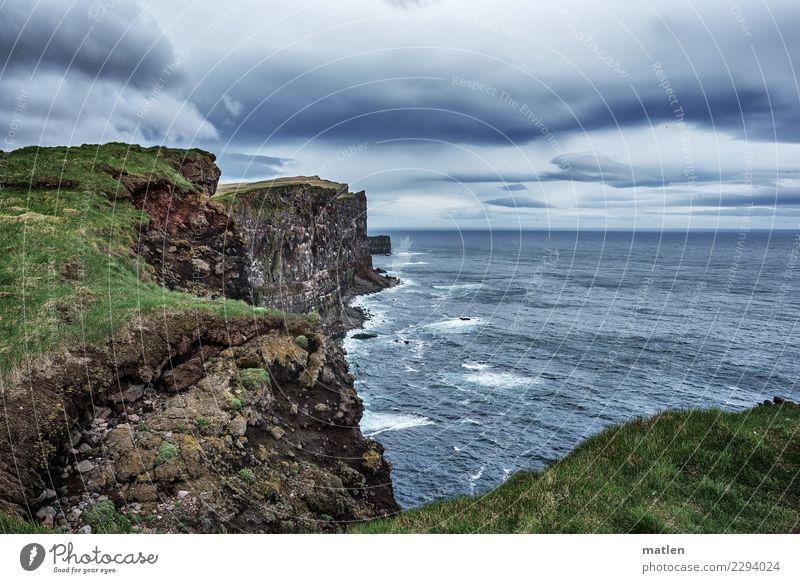 Latrabjarg Himmel Natur Pflanze blau grün Landschaft Meer Tier dunkel Frühling Küste Gras grau braun Felsen Horizont