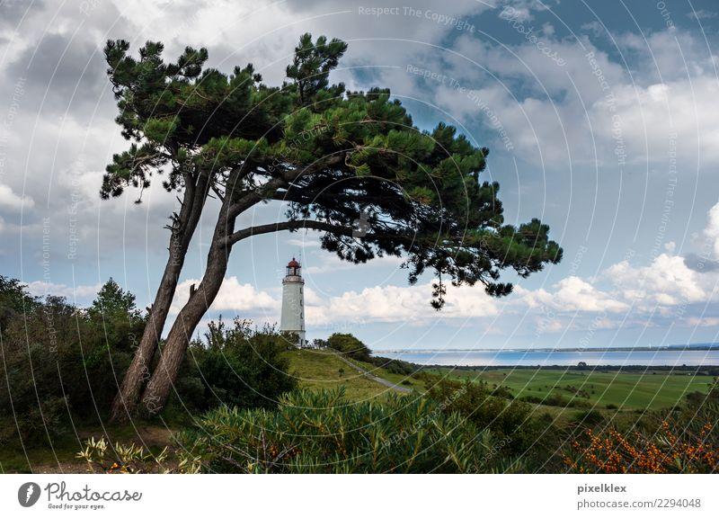 Leuchtturm auf der Insel Hiddensee Ferien & Urlaub & Reisen Tourismus Ausflug Umwelt Natur Landschaft Wasser Himmel Wolken Klima Wetter Wind Baum Wiese Hügel