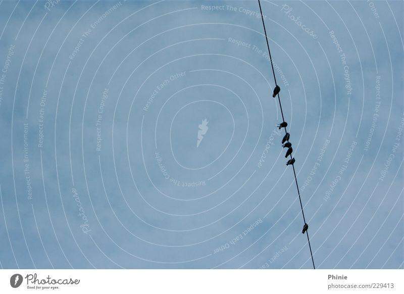 Auf der Leitung Himmel blau Wolken Tier schwarz Erholung Umwelt Freiheit oben Luft Vogel Zusammensein sitzen warten hoch mehrere