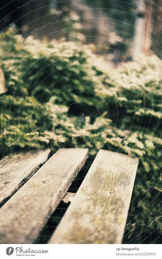 Ende des Weges Pflanze Sonnenlicht Sträucher braun grün Parkbank Bank Tag Schwache Tiefenschärfe Holzbank leer Menschenleer Unschärfe