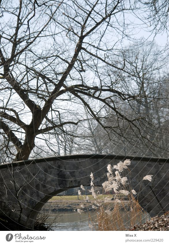 Die Brücken am Fluss - Nachträglich alles Gute zum Geburtstag Baum Winter kalt Landschaft See Wind Brücke Sträucher Seeufer Teich Bach Pflanze