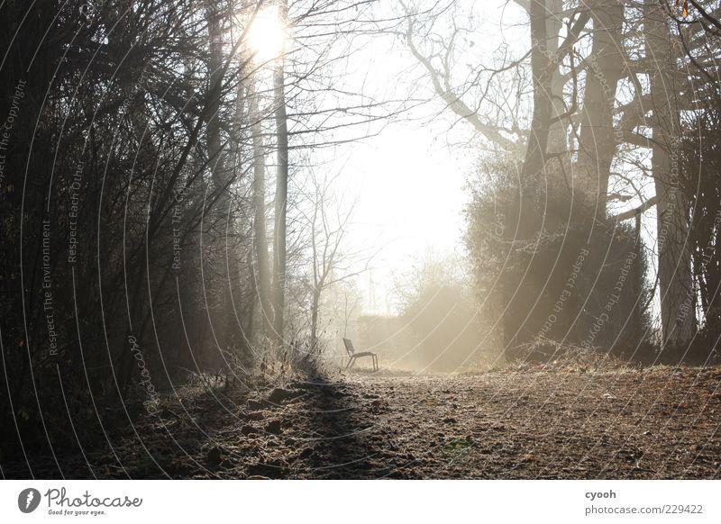 Samstagmorgen Natur Sonne Winter Wald Erholung Bank ruhig Morgen einzeln Fußweg Licht Schatten Sonnenstrahlen Gegenlicht Außenaufnahme Menschenleer Morgennebel