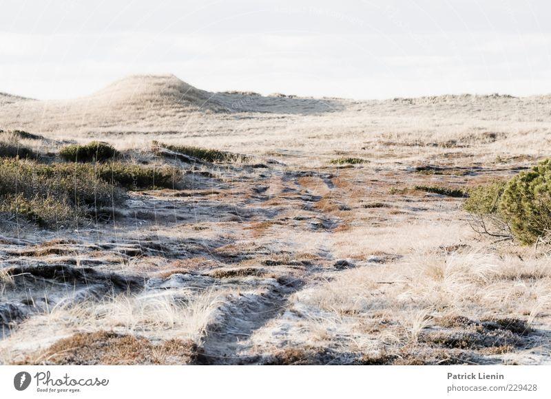 weil es schön war Himmel Natur schön Pflanze Winter Einsamkeit Ferne kalt Schnee Umwelt Landschaft Gras Luft hell Wetter Eis