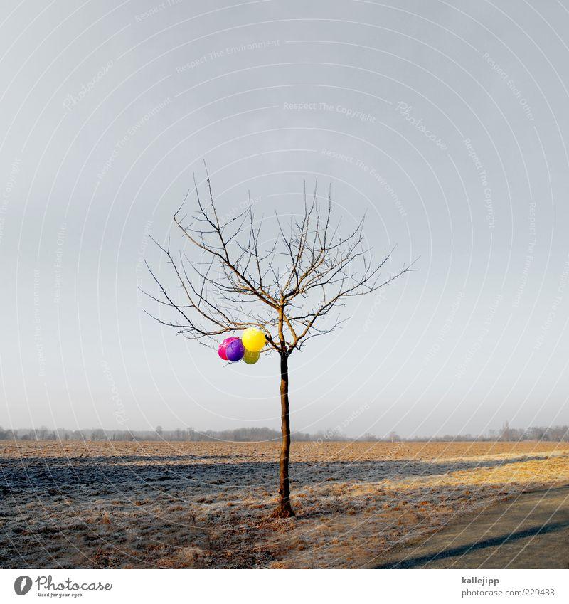 frühlingsanfang Natur schön Baum Winter Umwelt Landschaft Horizont Feld außergewöhnlich Luftballon Symbole & Metaphern hängen Wegweiser laublos Zufall