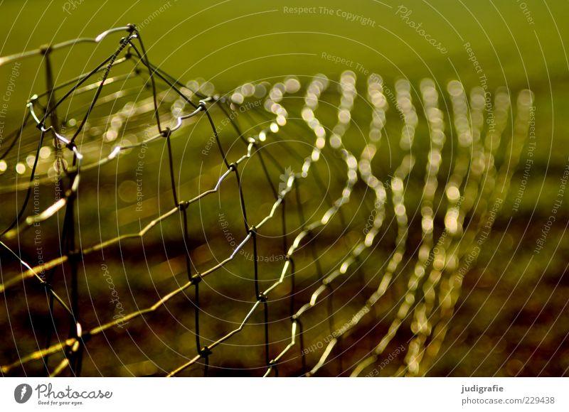 Maschendraht Natur Zaun Maschendrahtzaun trashig Grenze Schutz Farbfoto Außenaufnahme Menschenleer Tag Licht Lichterscheinung Unschärfe kaputt biegen glänzend
