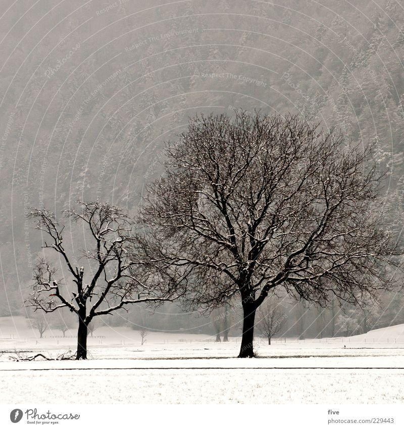 rise or fall Natur alt Baum Pflanze Winter Wald Wiese dunkel kalt Landschaft Feld Nebel groß Hügel stark laublos