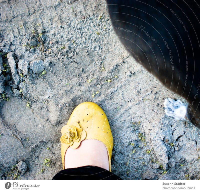 treu Landschaft Urelemente Erde gehen Hund Beine Mensch Blume gelb Accessoire Freundschaft Spaziergang Sommer Pfote sommerlich Zusammensein Gassi gehen