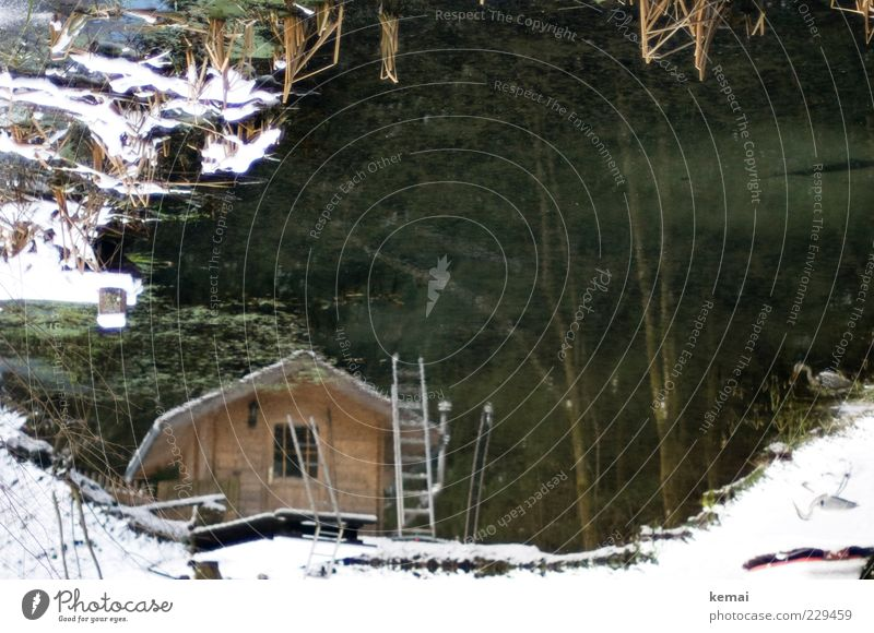 Outdoor Sauna Wellness Wohlgefühl Erholung ruhig Spa Umwelt Natur Winter Eis Frost Schnee Pflanze Baum Sträucher Garten Teich See Hütte Fenster Tür Leiter