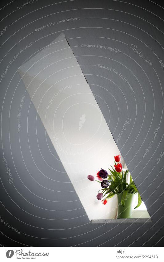 Ein TulpenineinerVaseBild Lifestyle Stil Häusliches Leben Wohnung Innenarchitektur Dekoration & Verzierung Raum Fenster Dachfenster Frühling Blume Blumenstrauß