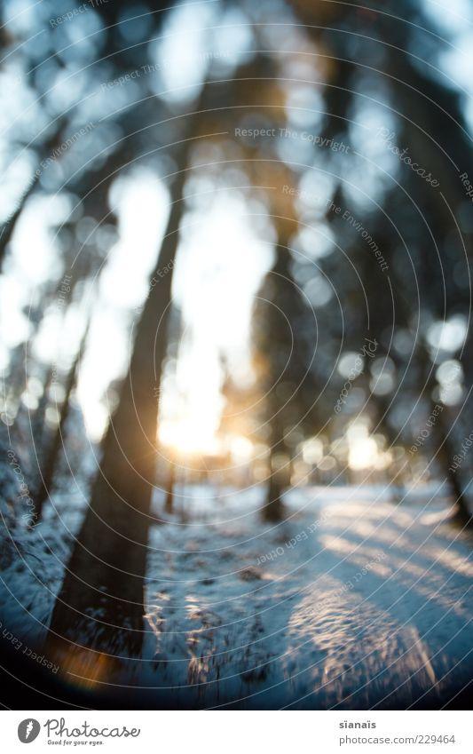 winterwanderung Umwelt Natur Landschaft Pflanze Sonne Wald kalt blau Baum Tanne Wege & Pfade Waldboden Spuren Baumstamm Traumwelt falsch Unschärfe Tilt-Shift