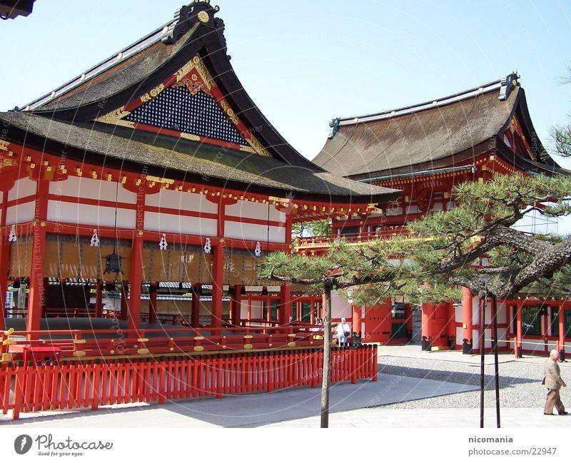 Tempel Japan Zen Bonsai Baum Tokyo