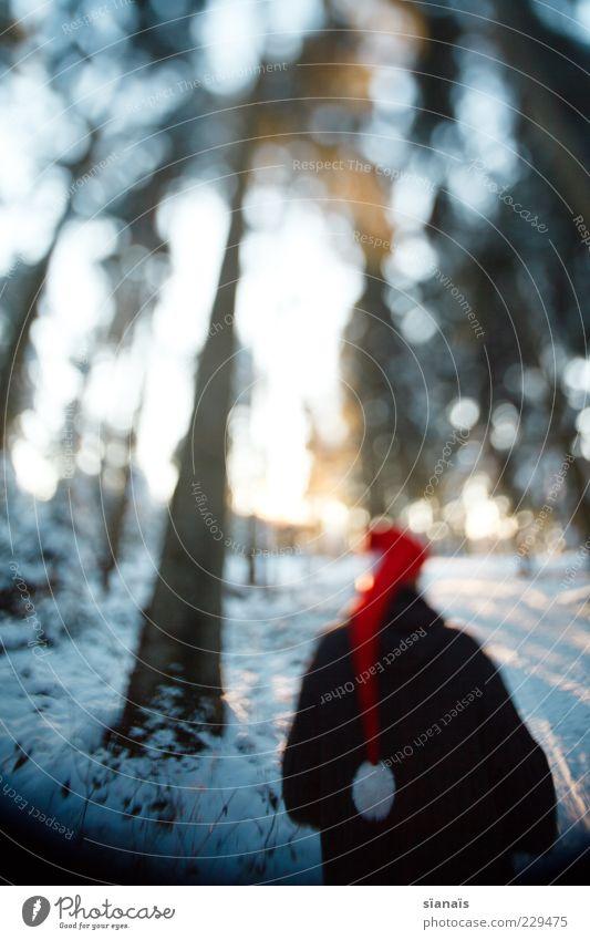 ein froodlein steht im walde Winter Mann Erwachsene Rücken Natur Landschaft Baum Wald Wege & Pfade Mütze dunkel kalt geheimnisvoll Perspektive Baumstamm