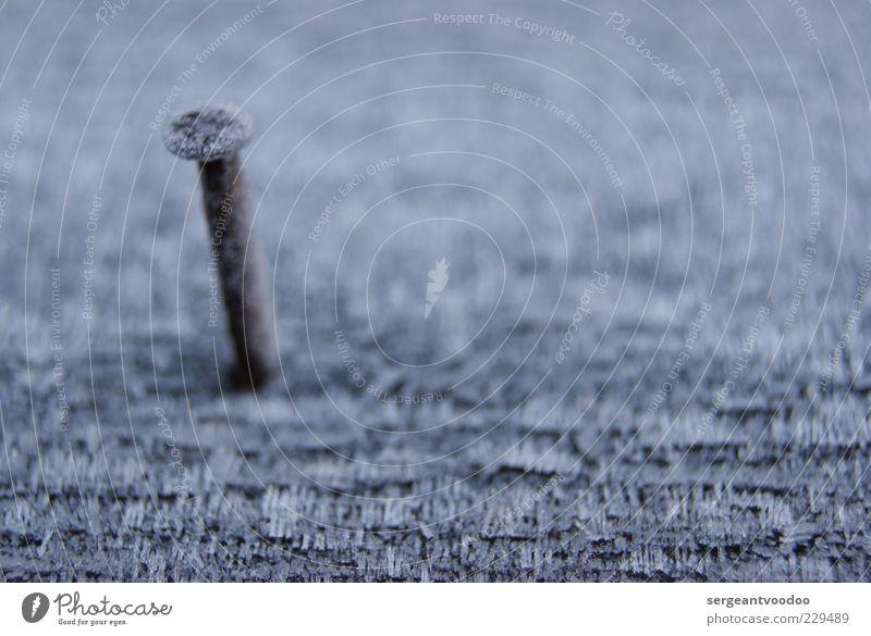 Nagelneues Foto ruhig Holz grau klein Metall Stimmung braun fest Rost Holzbrett Nagel standhaft