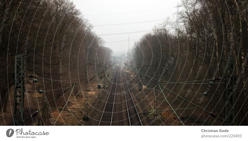 Von Wattenscheid in die Welt Baum braun Eisenbahn Gleise Hochspannungsleitung Elektrizität Schienenverkehr Schienennetz