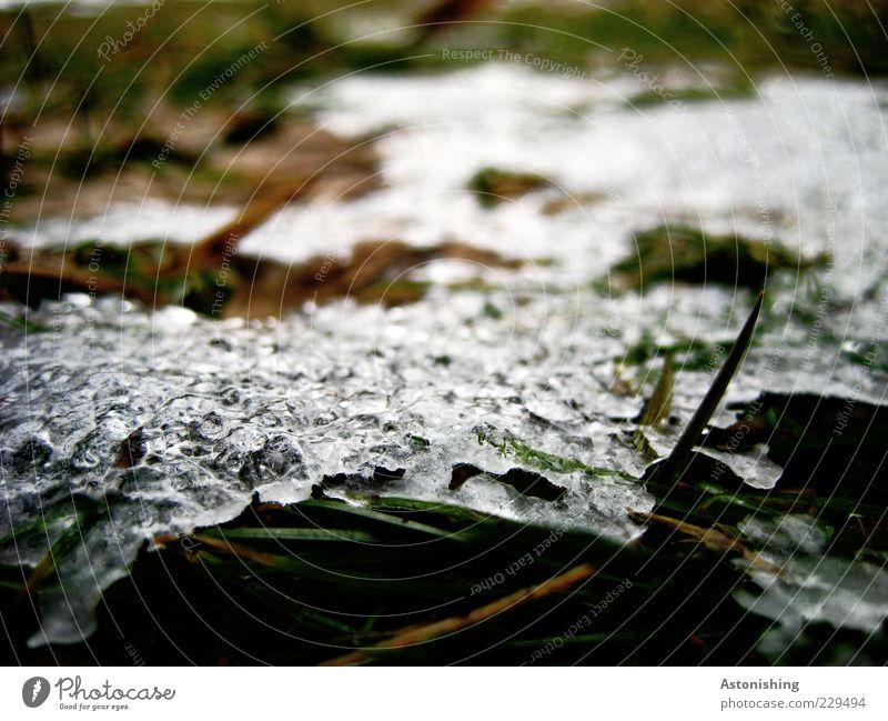 letzter Rest Umwelt Natur Pflanze Frühling Winter Eis Frost Schnee Gras Wiese kalt grün schwarz weiß gefroren Halm Unschärfe Tau Eisschicht schmelzen Farbfoto