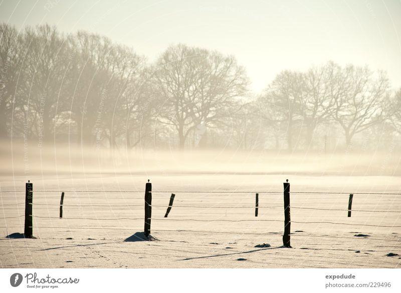 Winternebel Natur Landschaft Nebel Eis Frost Schnee Feld Stimmung Farbfoto Außenaufnahme Morgen Zaunpfahl Menschenleer Morgennebel Baum Nebelschleier Nebeldecke