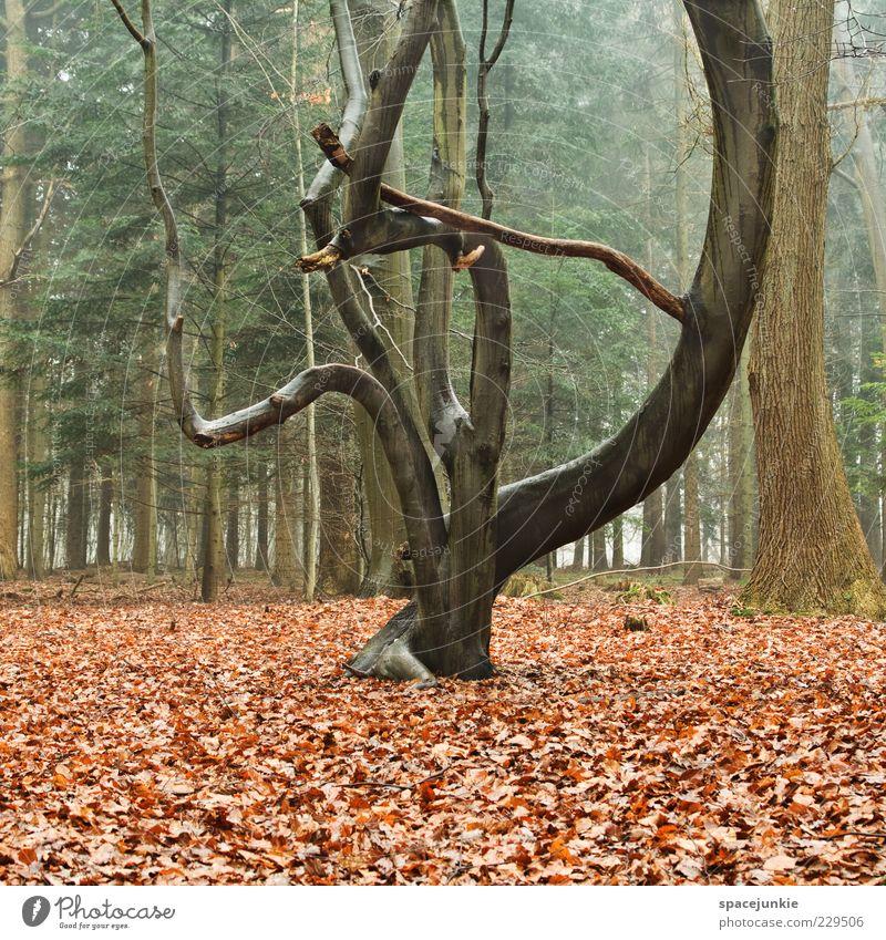 tree Natur Baum Pflanze Blatt Wald Herbst Umwelt Landschaft Holz Nebel nass Wachstum leer außergewöhnlich Ast feucht