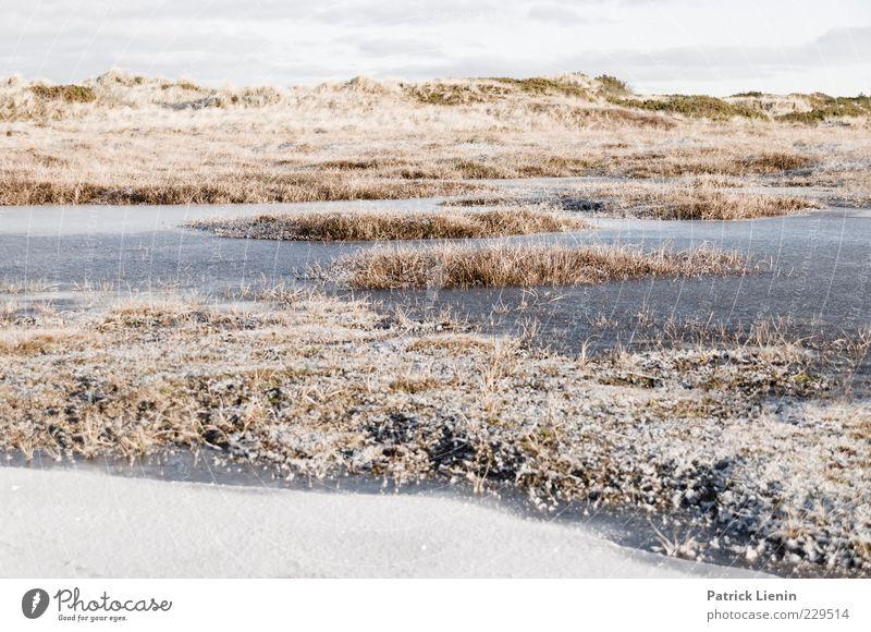 long long winter Umwelt Natur Landschaft Pflanze Urelemente Luft Winter Klima Wetter Eis Frost Schnee Gras Sträucher Hügel hell kalt schön Pfütze gefroren