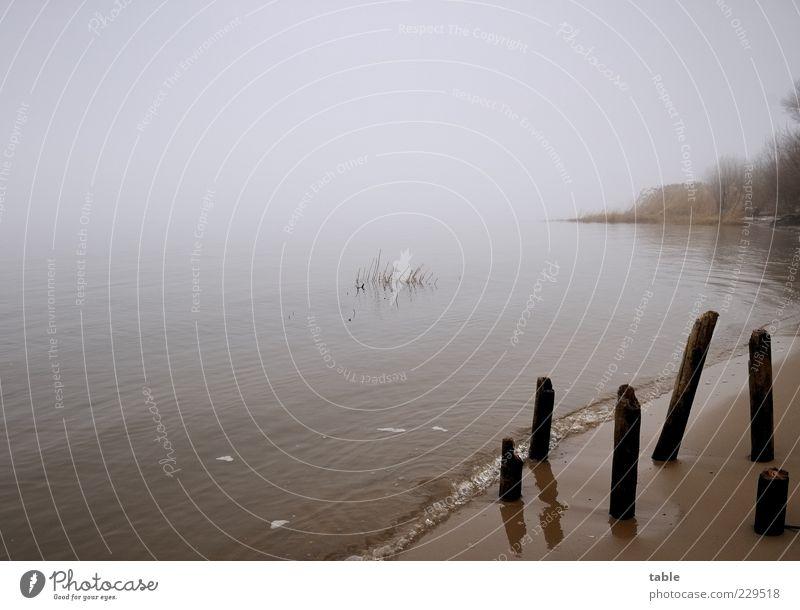Avalon Himmel Natur Wasser Pflanze Strand Winter ruhig Einsamkeit dunkel kalt Umwelt Landschaft Gefühle grau Sand Küste