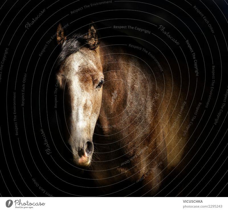 Pferdekopf Porträt am dunklen Hintergrund Stil Design Tier 1 Vollblutaraber Pferdestall Farbfoto Innenaufnahme Textfreiraum Mitte