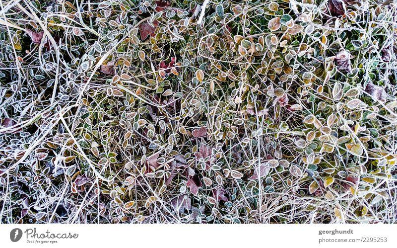 Schneekraut Wellness Wohlgefühl Zufriedenheit Ausflug Winter Garten Umwelt Natur Landschaft Pflanze Blatt Grünpflanze Park Feld gelb grün orange silber weiß