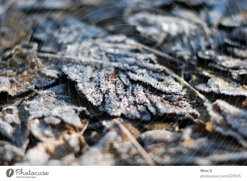 Früh am Morgen Natur Blatt Winter Herbst kalt Wetter braun Eis liegen Boden Frost Herbstlaub Eisblumen herbstlich Eiskristall Raureif