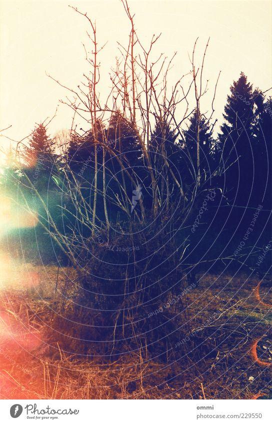 Verworren Natur alt Baum Pflanze Wald dunkel Landschaft Angst wild trist Wandel & Veränderung Sträucher bedrohlich Ast trocken analog