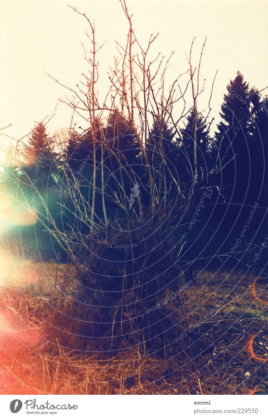Verworren Natur Landschaft Pflanze Baum Farn Wildpflanze Baumstumpf Wald alt bedrohlich dunkel stachelig trist trocken wild Angst Verfall Wandel & Veränderung