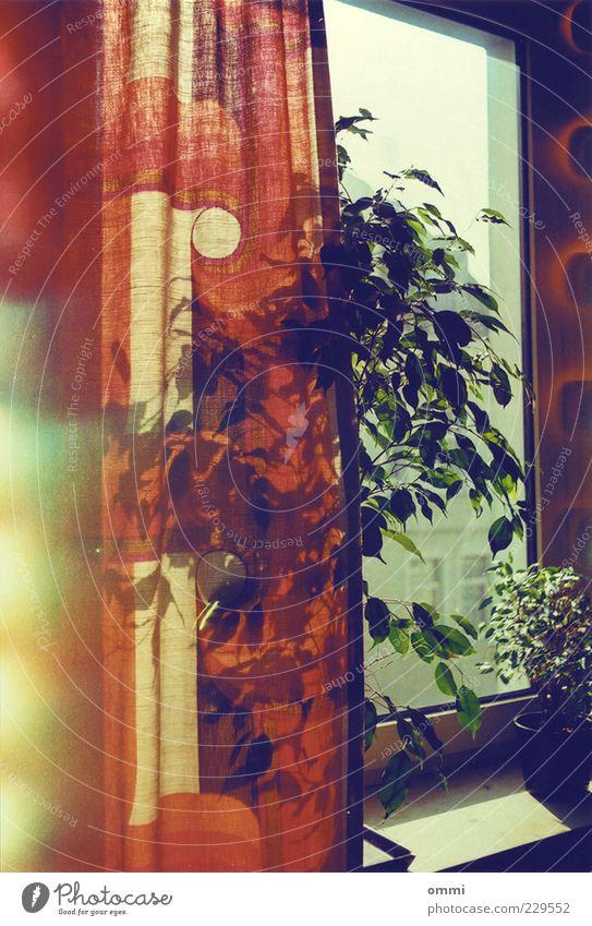 Vorhang & Fensterbankflora grün rot Blatt ruhig gelb Fenster Wärme hell Zufriedenheit Wohnung authentisch Häusliches Leben Dekoration & Verzierung einfach Warmherzigkeit Freundlichkeit