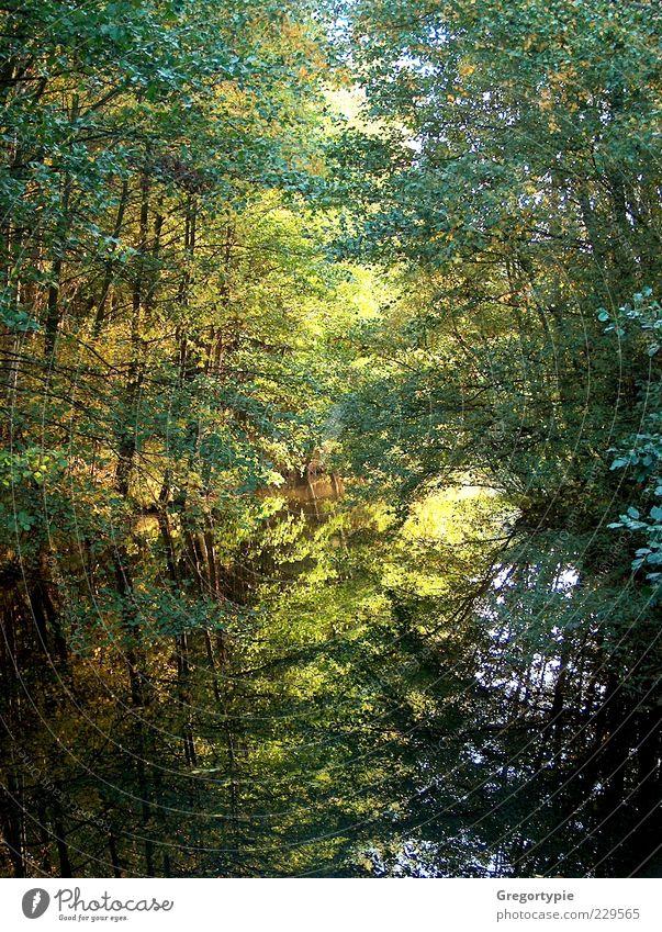 Spiegelbild Natur Wasser Baum Sträucher Blatt Moor Sumpf Teich See grün Umwelt Farbfoto Außenaufnahme Menschenleer Tag Kontrast Reflexion & Spiegelung
