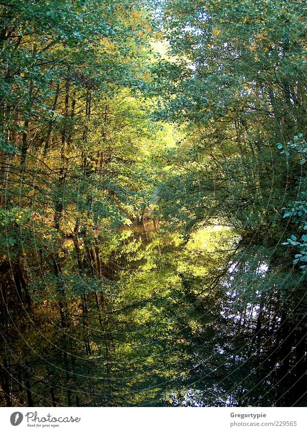 Spiegelbild Natur Wasser grün Baum Blatt Umwelt See Sträucher Teich Sumpf Moor Reflexion & Spiegelung Wasserspiegelung