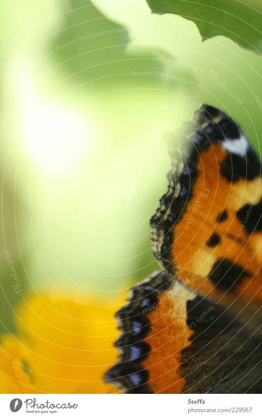 Flügelwesen Natur Frühling Sommer Schmetterling Edelfalter Monarch außergewöhnlich schön grün Romantik träumen einzigartig Farbe Leichtigkeit fein zart