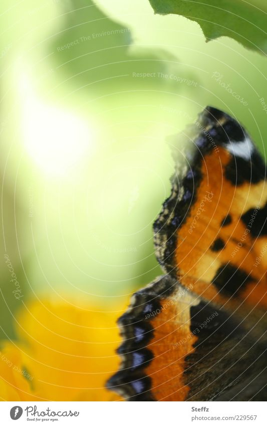 Schmetterlingsflügel - lichtvoll und märchenhaft Flügel anders Lichtstimmung Monarch hellgrün romantisch Sinn einzigartig zartes Grün Edelfalter Sommergefühl