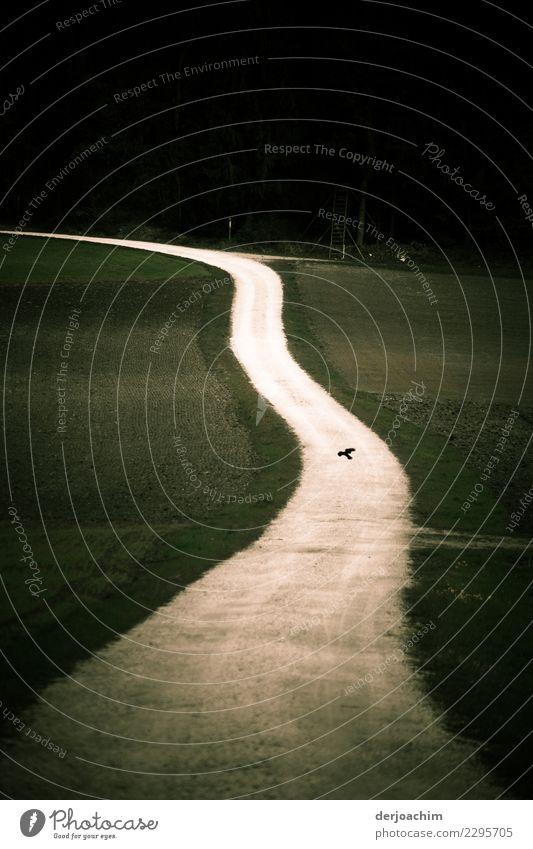 schwungvoll /mein Weg Landschaft Erholung ruhig Herbst Wege & Pfade Wiese Deutschland braun Sand Zufriedenheit wandern Idylle genießen Perspektive Lebensfreude