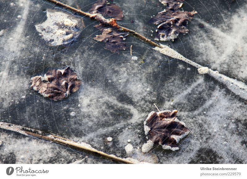 Naturkunst 2 Pflanze Wasser Winter Eis Frost Blatt Seeufer Teich frieren warten kalt schön stagnierend Eisfläche Sauerstoff Pflanzenteile Schaum Farbfoto
