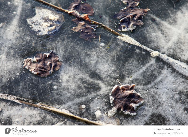 Naturkunst 2 Wasser schön Pflanze Blatt Winter kalt See Eis warten Frost Seeufer Stengel frieren Teich Textfreiraum