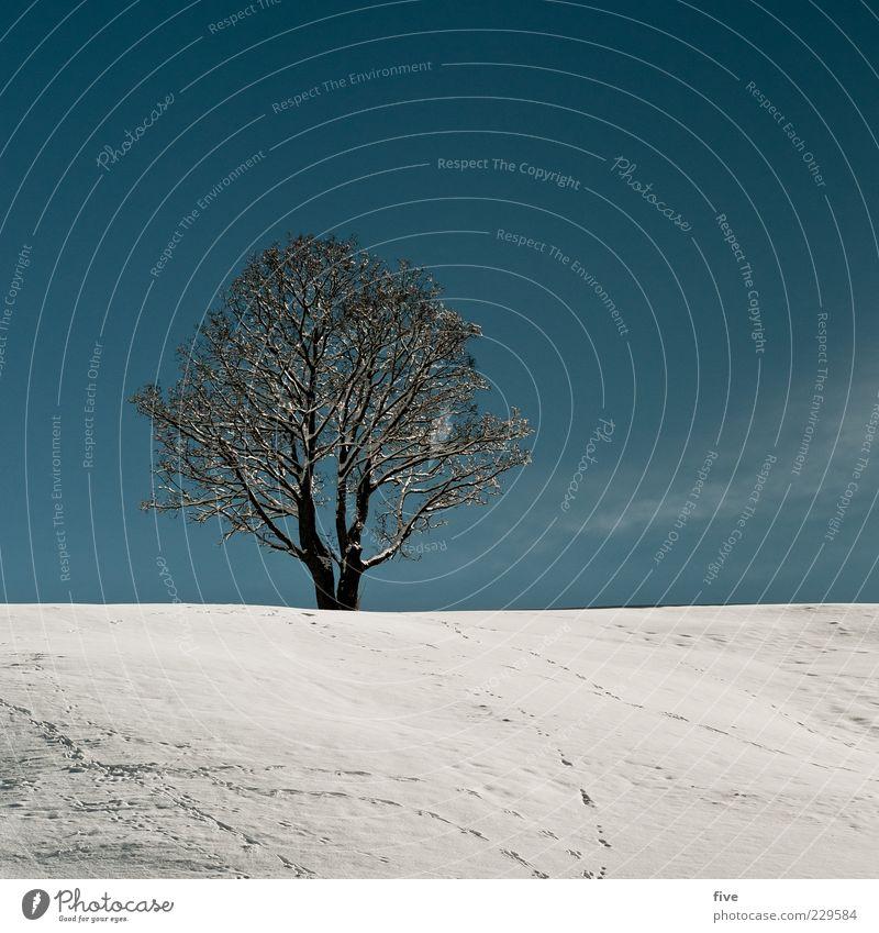 einsamkeit / nachträglicher beitrag Umwelt Natur Himmel Wolkenloser Himmel Winter Schönes Wetter Schnee Pflanze Baum Hügel alt kalt blau weiß Stimmung Kraft