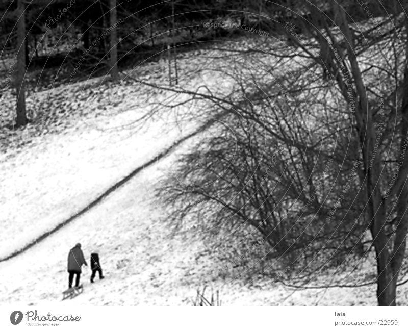 sleigh ride Winter Schnee Berge u. Gebirge Wege & Pfade Europa Nostalgie