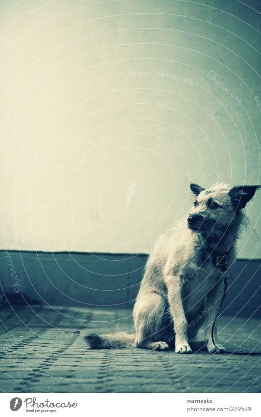 fear 2 Tier Einsamkeit dunkel Gefühle Hund Traurigkeit Stimmung Angst sitzen warten Fassade gefährlich kaputt Sicherheit trist Trauer