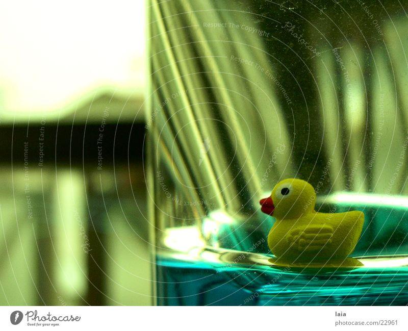duck Fenster gelb Ente Wasser Glas blau