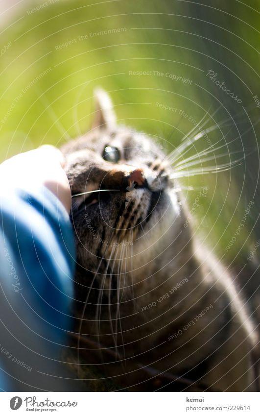 Anschmiegen Natur Hand Tier Auge Liebe Umwelt Katze Frühling hell Freundschaft Zusammensein Tiergesicht Fell Vertrauen Schönes Wetter genießen