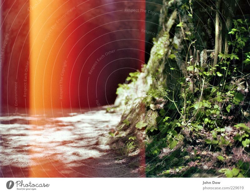 red's my favourite colour Baum Pflanze rot Wald Gras Wege & Pfade Angst Felsen Ausflug außergewöhnlich Sträucher bedrohlich einzigartig Neugier Schönes Wetter analog