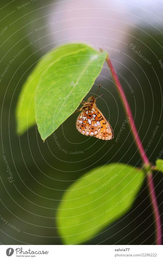 Blätterdach Natur Pflanze Tier Sommer Blatt Wildtier Schmetterling Insekt 1 grün Einsamkeit Pause ruhig Schutz Farbfoto Außenaufnahme Nahaufnahme Menschenleer
