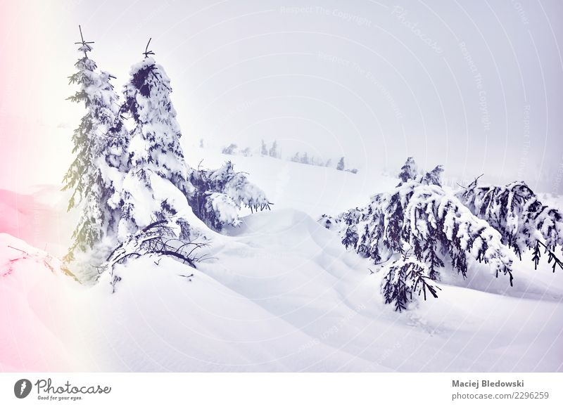 Winterlandschaft an einem verschneiten Tag Schnee Winterurlaub Berge u. Gebirge Natur Landschaft Wolken Wetter Nebel Baum Hügel Dekadenz geheimnisvoll
