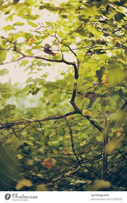 Photovoltaik Natur Baum Pflanze Sommer Blatt Herbst natürlich Wachstum Ast Schönes Wetter Textfreiraum nachhaltig Geäst Zweige u. Äste